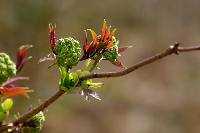 rašící rostlina