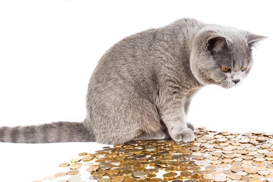 kočka a peníze